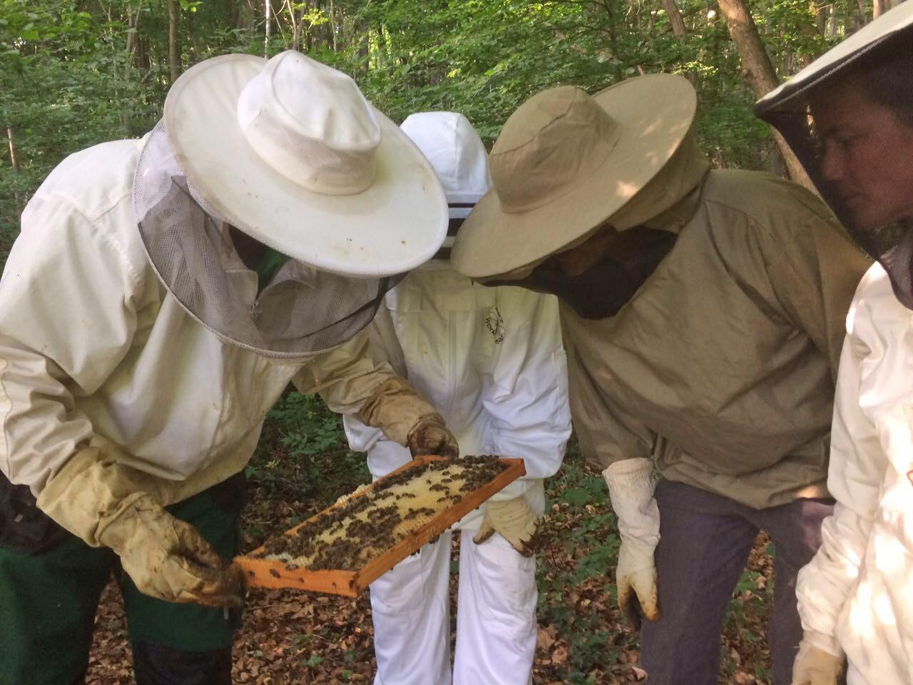 Grüner Bundestagskandidat im Schutzanzug – Gerhard Zickenheiner auf Erkundungstour zur Bienenzucht von Thomas Bayer am Haltinger Berg